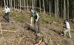 Lehrkräfte pflanzen Zederarten im Hattendorfer Forst