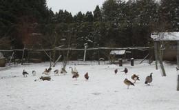 H5N8-Fälle: Tötung artgeschützter Tiere ist nicht einzige Handlungsalternative