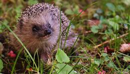 NABU bittet darum, im Herbst Rücksicht auf die Tiere im Garten zu nehmen
