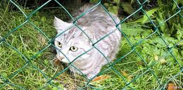 Tier aus Neuenberg seit einer Woche bereits verschwunden