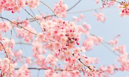 Der Frühling ist in Sicht: Ab Mittwoch wird es endlich wärmer!