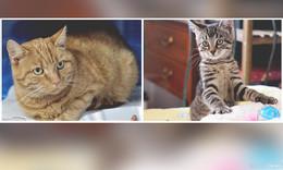 Ratz und Lotta sind bereit für eine neue Familie