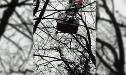 In schwindelerregender Höhe: Kater Oskar sitzt auf Baum fest - Tier gerettet!