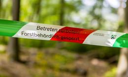 Staat will sparen: Keine Daseinsberechtigung mehr für Reh- und Rotwild?