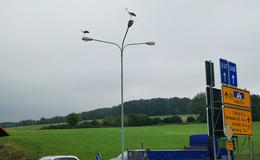 Störche bewachen mit Adleraugen den Verkehr
