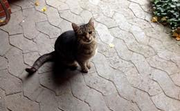 Stubentiger zugelaufen - Wer kennt diese Katze?