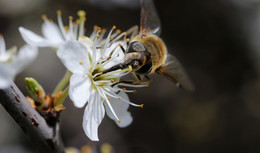 Frühlingserwachen: Endlich trauen sich die Blüten raus!