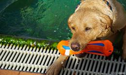 Tierisches Badevergnügen: FWG will Hundeschwimmen im Geistalbad etablieren