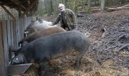Waldschweine im Rupbodenener Wald: Sechs Hektar traumhaftes Revier