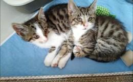 Katzenbabys Hänsel und Gretel am Habelberg ausgesetzt