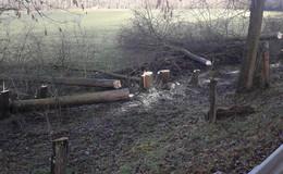 Schock in Büchenberg: 18 Bäume entlang der K 69 illegal gefällt