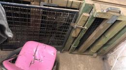 Dramatische Zustände in Hundezentrum: Zehn Hunde vom Veterinäramt beschlagnahmt