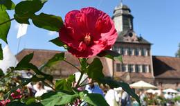 Das Fürstliche Gartenfest auf Schloss Fasanerie im neuen Look