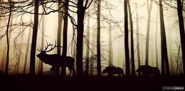 Wald vor Wild: Hessisches Umweltministerium fordert mehr Abschüsse