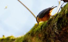 Nicht stören: NABU Hessen bittet um Rücksicht bei Ausflügen in die Natur