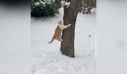 Wer hat die scheue Katze Garfielda gesehen?