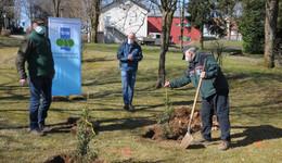 Die Stechpalme: Baum des Jahres im Stadtpark gepflanzt