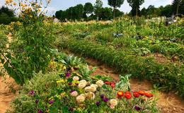 Meine Kartoffeln, mein Salat: Hochsaison im Tegut-Saisongarten
