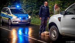 Wildunfallgefahr steigt – Film für Verkehrsteilnehmer vorgestellt