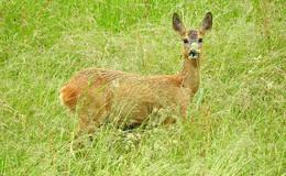 Tiere verdienen Achtung - aber nur, wenn sie nicht im Wald leben?