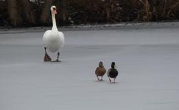 Kurzes winterliches Intermezzo: Am Freitagvormittag gibt es Schneeregen