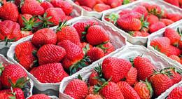 Hessische Erdbeersaison 2021 startet: Kälte sorgt für Verzögerungen