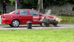 Erfolgreicher Aktionstag - Tipps und Tricks von Polizei, ADAC und Jägerschaft