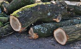 Zahlreiche Bäume sterben ab: Baumfällarbeiten an der Langen Heide
