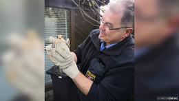 Tierischer Einsatz für die Polizei: Turmfalke nach Sturz behandelt