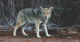 Die Angst vor dem Wolf: Menschen dürfen nicht alleine gelassen werden