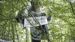 Winterfeste Baumhäuser: Aktivisten besetzen Dannenröder Forst weiter