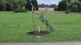 NSU-Opfer Enver Simsek: Nach abgesägtem Baum folgt Holzbank