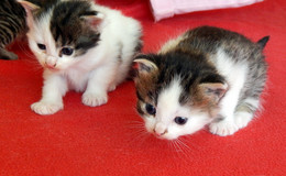 Tierschutz verschenkt 20 Kastrationsgutscheine für herrenlose Katzen