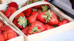 Erdbeersaison geht zu Ende: Gute Nachfrage nach schlaflosen Nächten