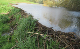 Störungen im Biberrevier: Damm lässt Wasser durch - Schwachstelle gefunden