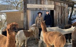 Alpakas im Lockdown: Rudi, Lenny, Sánchez & Co. schieben eine ruhige Kugel