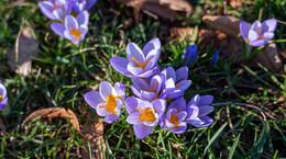 Ciao Winterblues und Hallo Frühlingsgefühle - drei Tage Sonne satt für die Seele