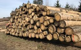 Waldwirtschaftsplan: Wieder ein Katastrophenjahr für den Ulrichsteiner Stadtwald