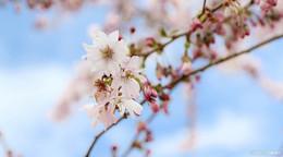 Wetterphänomen Februar: Nach tiefem Winter kommt sonniger Frühling
