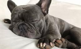 So viele schöne Hunde in Osthessen - Leserbilder (2) zum Welthundetag