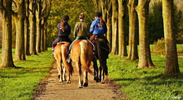 Sichtbarkeit und Sicherheit von Tier und Reiter