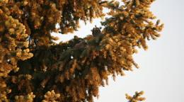 Wer fiept denn da? Junge Waldohreulen in Nachbars Garten