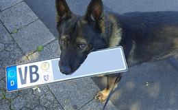 Diensthund Yano bringt gefälschtes Kennzeichen zur Dienststelle
