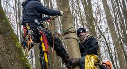 Bäume durch Besetzung erheblich geschädigt: Müssen gefällt werden