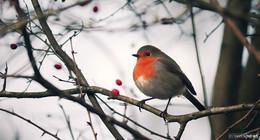Stunde der Wintervögel: 40 Interessenten beobachteten gemeinsam