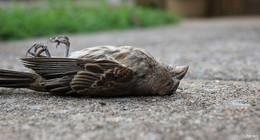 Geflügelpest in Deutschland nachgewiesen - Hessen warnt vor Vogelgrippe