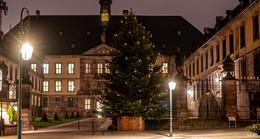 Warm ums Herz: Weihnachtsbäume vor Stadtschloss und Dom aufgestellt
