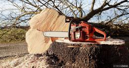 B 254 Fulda: Baumfällarbeiten an der Frankfurter Straße