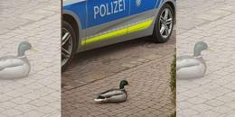 Ente gut, alles gut: Spektakuläre Vermisstensuche der Bad Brückenauer Polizei
