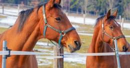 Verdächtige Personen im Bereich von Pferdekoppeln gesichtet